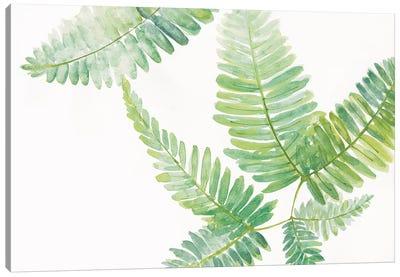 Ferns II Canvas Art Print