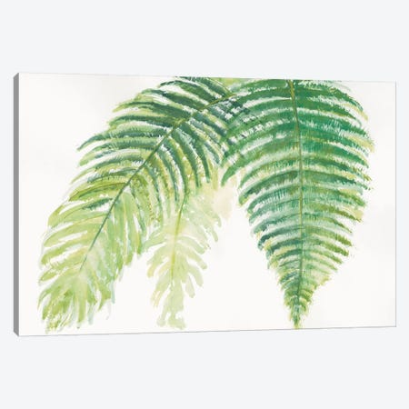 Ferns III Canvas Print #WAC4990} by Chris Paschke Canvas Art Print