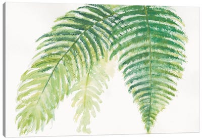 Ferns III Canvas Print #WAC4990