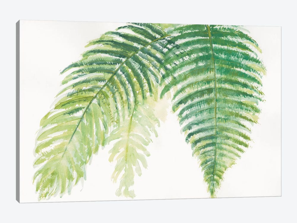 Ferns III by Chris Paschke 1-piece Canvas Print