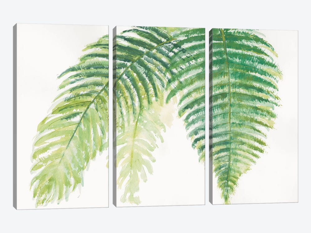 Ferns III by Chris Paschke 3-piece Canvas Art Print