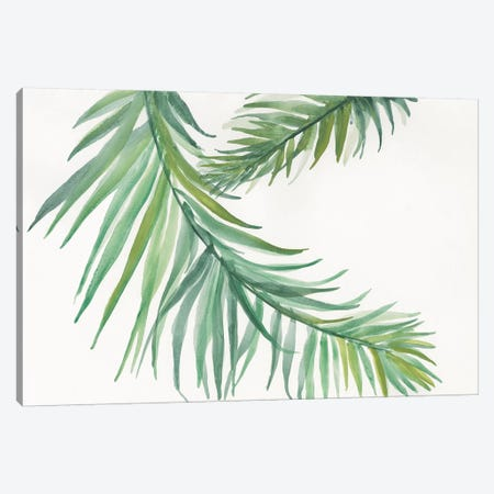 Ferns IV Canvas Print #WAC4991} by Chris Paschke Canvas Art Print