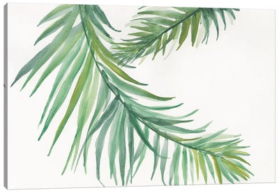 Ferns IV Canvas Art Print