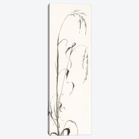 Gray Grasses III 3-Piece Canvas #WAC4992} by Chris Paschke Art Print