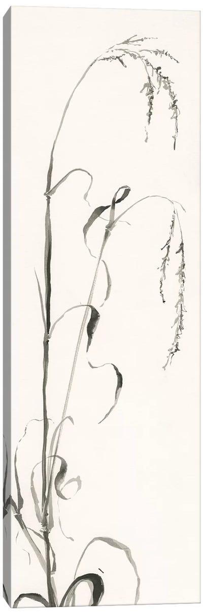 Gray Grasses III Canvas Art Print