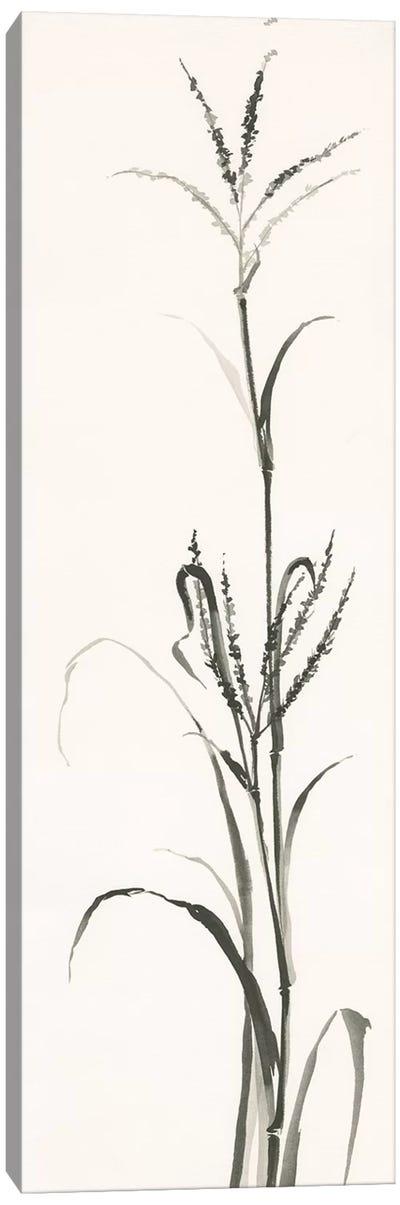 Gray Grasses IV Canvas Art Print