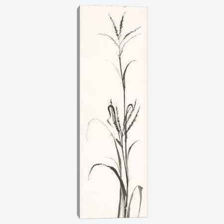 Gray Grasses IV Canvas Print #WAC4993} by Chris Paschke Canvas Art Print