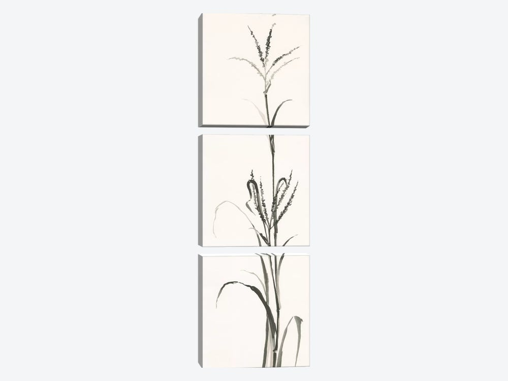 Gray Grasses IV by Chris Paschke 3-piece Canvas Art