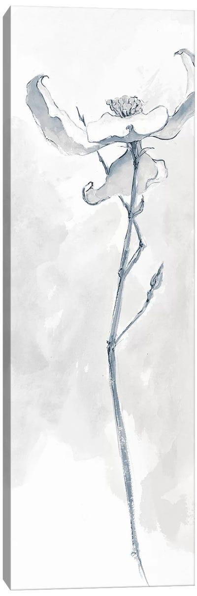 Solitary Dogwood IV Canvas Print #WAC5000