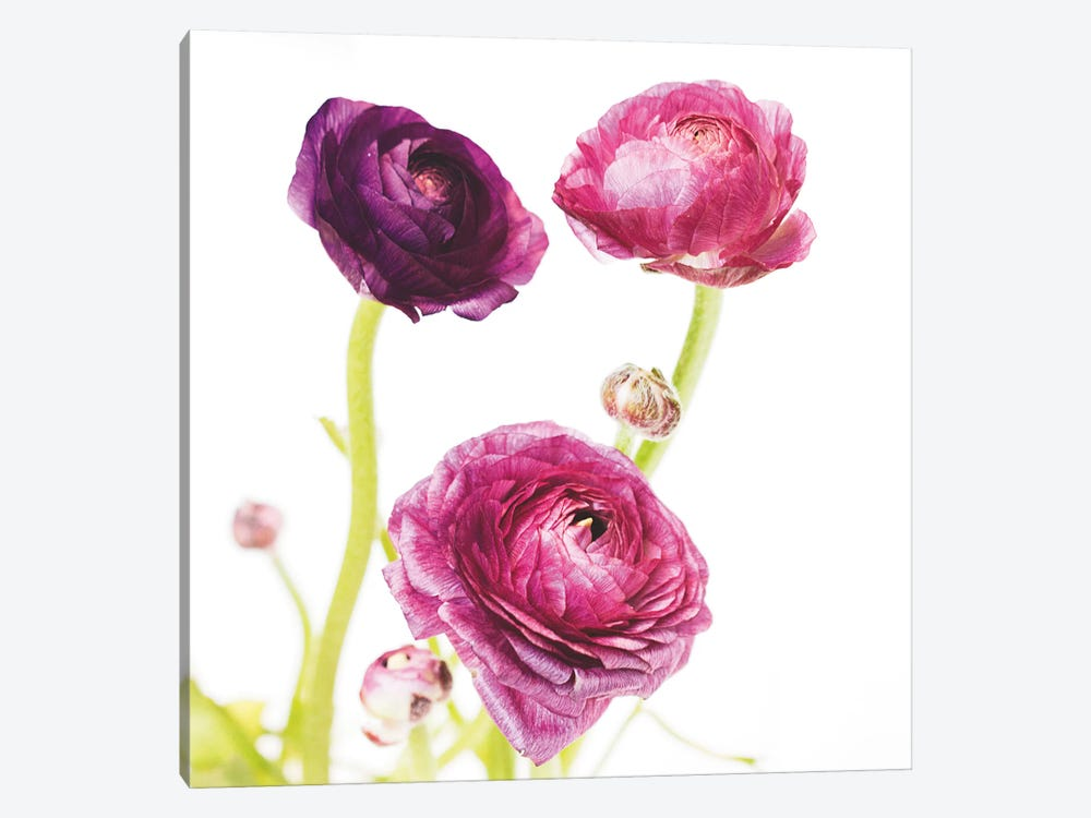 Spring Ranunculus I by Laura Marshall 1-piece Canvas Wall Art