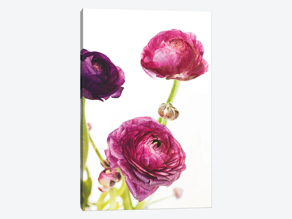 Spring Ranunculus V by Laura Marshall 1-piece Canvas Art Print
