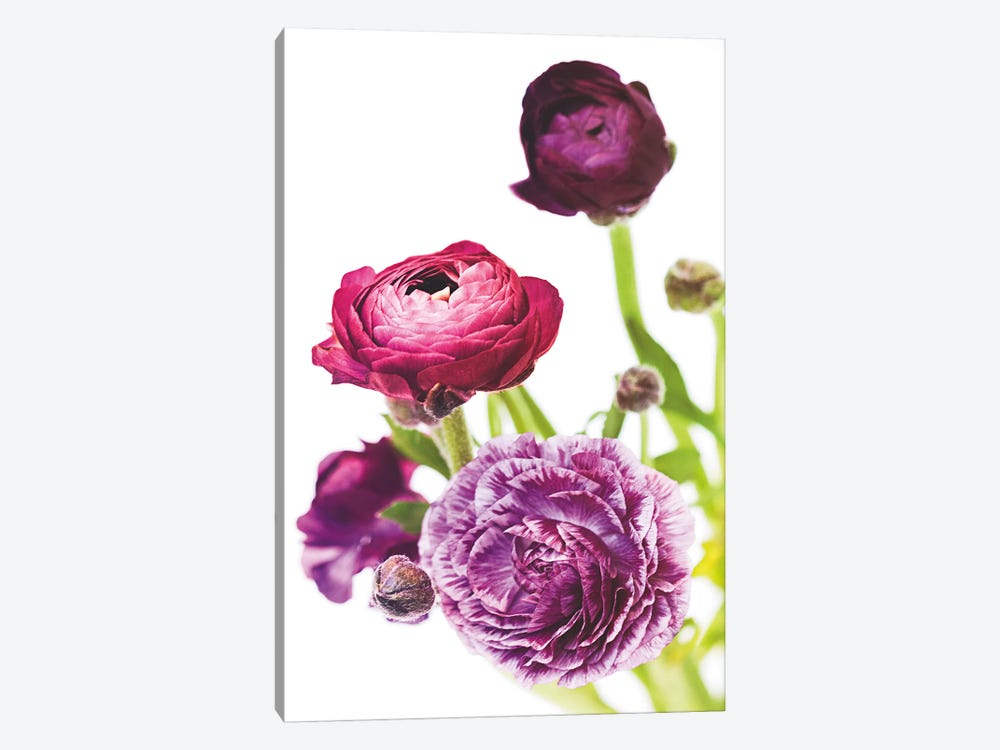 Spring Ranunculus VI 1-piece Canvas Artwork