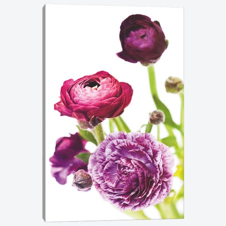 Spring Ranunculus VI 3-Piece Canvas #WAC5011} by Laura Marshall Canvas Print
