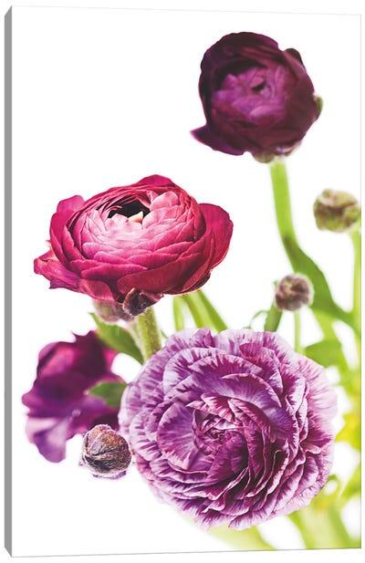 Spring Ranunculus VI Canvas Art Print