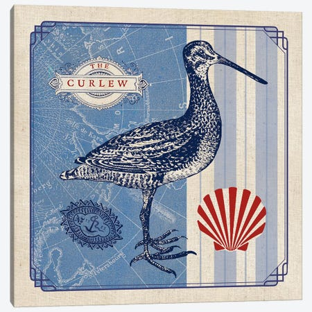 Sea Bird III Canvas Print #WAC5065} by Studio Mousseau Canvas Print