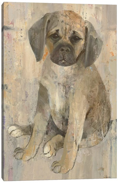 Paco Canvas Art Print