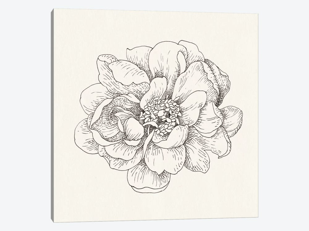 Pen And Ink Florals IV by Danhui Nai 1-piece Canvas Art Print
