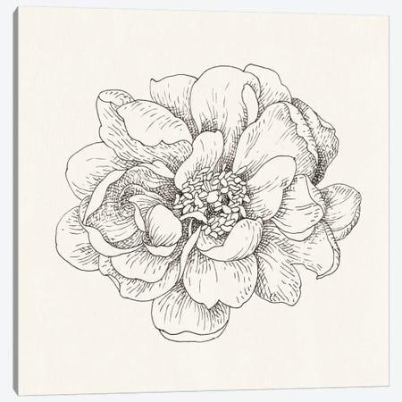 Pen And Ink Florals IV Canvas Print #WAC5160} by Danhui Nai Canvas Art Print