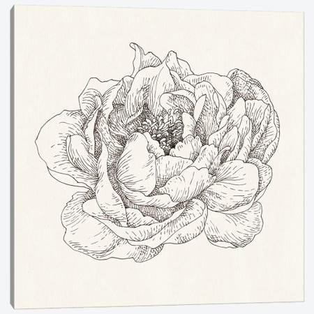 Pen And Ink Florals V Canvas Print #WAC5161} by Danhui Nai Art Print