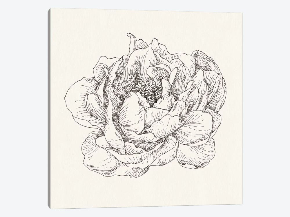 Pen And Ink Florals V by Danhui Nai 1-piece Canvas Artwork