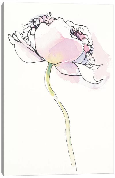 Single Pink Somniferum I Canvas Art Print