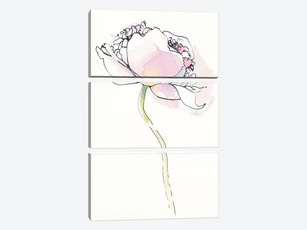 Single Pink Somniferum I by Shirley Novak 3-piece Canvas Artwork