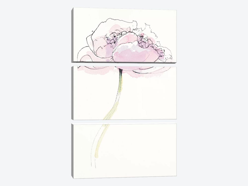 Single Pink Somniferum II by Shirley Novak 3-piece Canvas Artwork