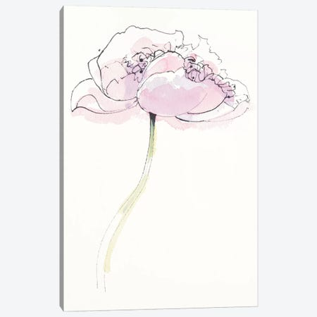 Single Pink Somniferum II Canvas Print #WAC5230} by Shirley Novak Art Print