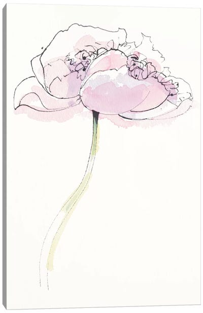 Single Pink Somniferum II Canvas Art Print