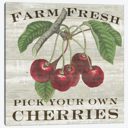 Farm Fresh Cherries Canvas Print #WAC5244} by Sue Schlabach Canvas Print