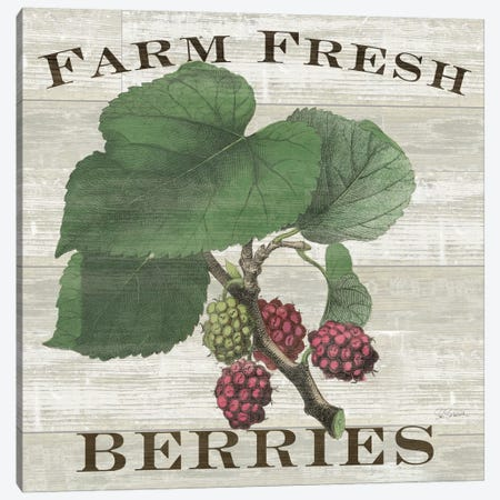 Farm Fresh Raspberries Canvas Print #WAC5245} by Sue Schlabach Art Print
