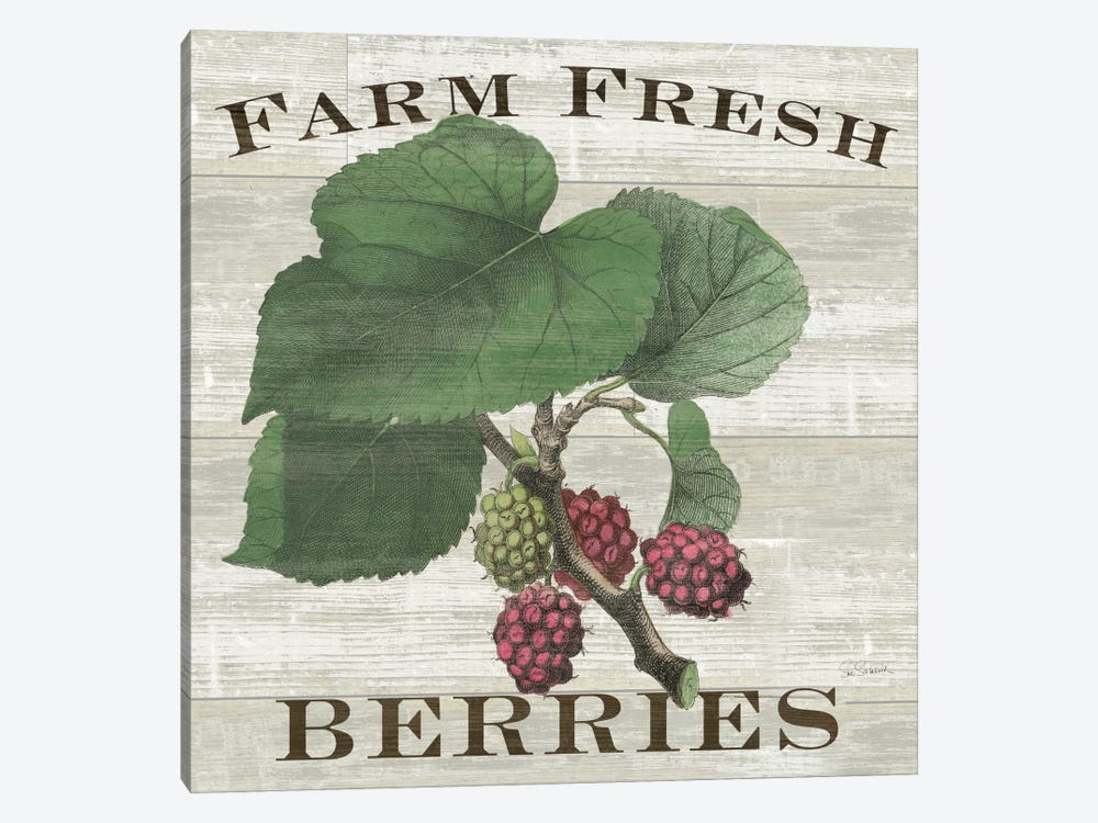 Farm Fresh Raspberries by Sue Schlabach 1-piece Canvas Art