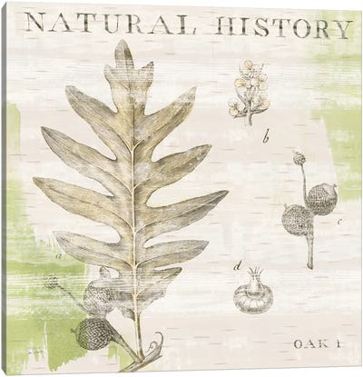 Natural History Oak I Canvas Art Print