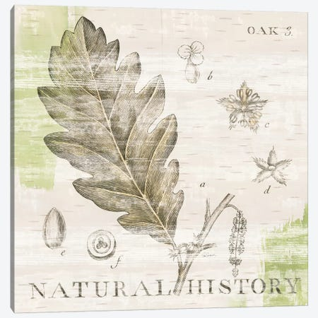 Natural History Oak III Canvas Print #WAC5262} by Sue Schlabach Canvas Wall Art