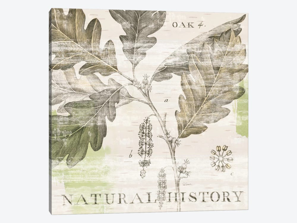 Natural History Oak IV by Sue Schlabach 1-piece Canvas Wall Art