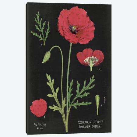Poppy Chart Canvas Print #WAC5269} by Sue Schlabach Canvas Artwork