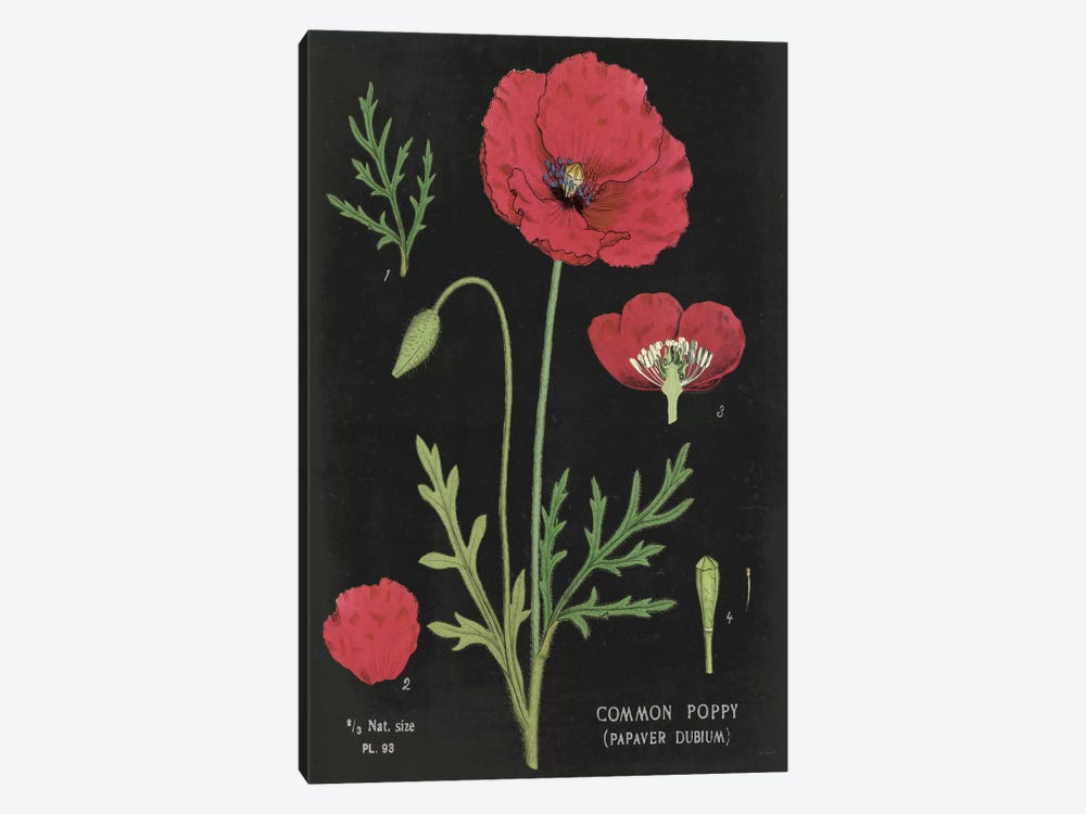 Poppy Chart by Sue Schlabach 1-piece Canvas Artwork