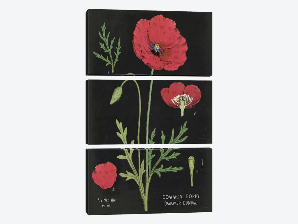 Poppy Chart by Sue Schlabach 3-piece Canvas Wall Art