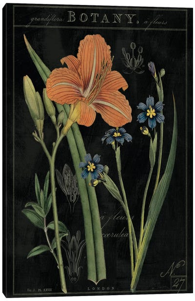Vintage Flora II On Black Canvas Print #WAC5274
