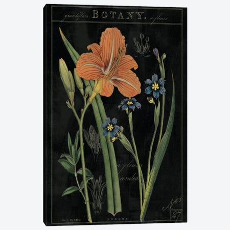 Vintage Flora II On Black Canvas Print #WAC5274} by Sue Schlabach Canvas Artwork