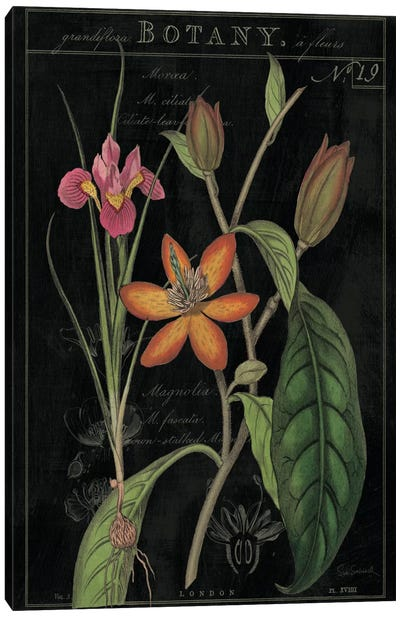 Vintage Flora III On Black Canvas Art Print