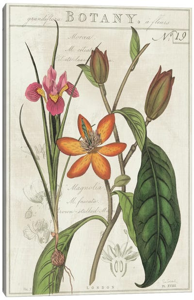 Vintage Flora III On Ivory Canvas Art Print