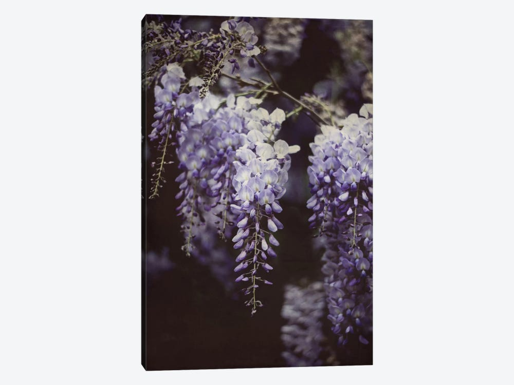 Wisteria Cascade I 1-piece Canvas Art Print