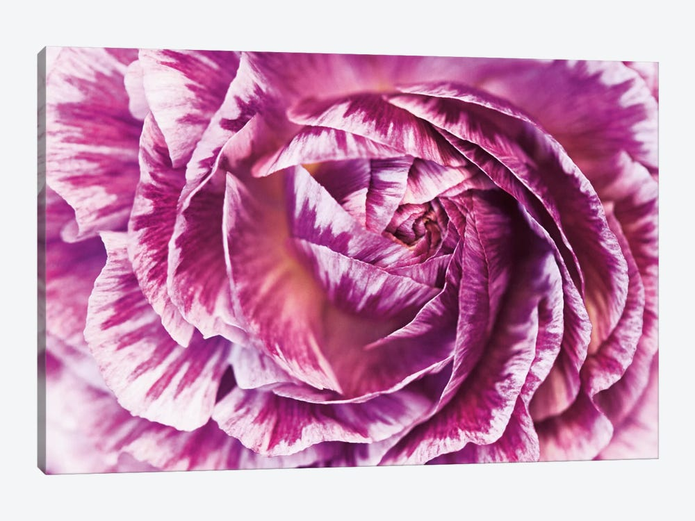 Ranunculus Abstract VI by Laura Marshall 1-piece Art Print