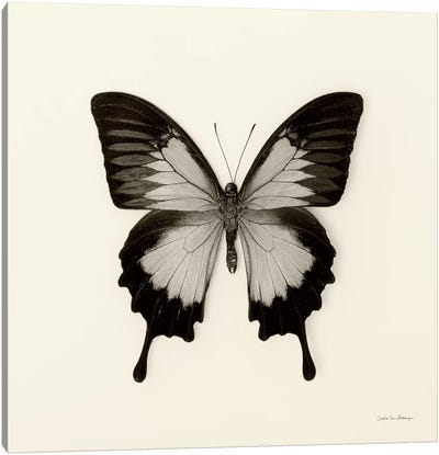 Butterfly III In B&W Canvas Art Print