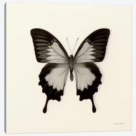 Butterfly III In B&W Canvas Print #WAC5457} by Debra Van Swearingen Canvas Wall Art