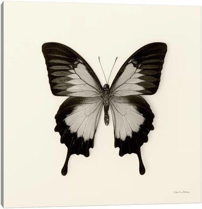 Butterfly III In B&W Canvas Art Print