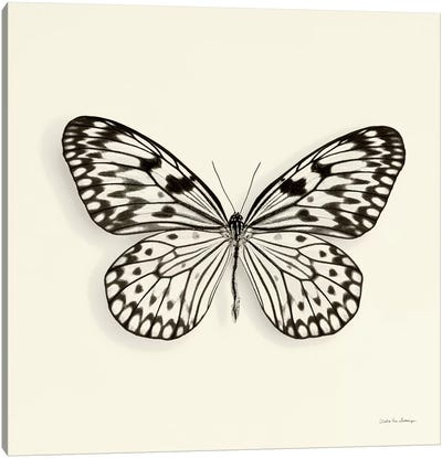 Butterfly V In B&W Canvas Art Print