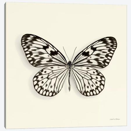 Butterfly V In B&W Canvas Print #WAC5459} by Debra Van Swearingen Canvas Print