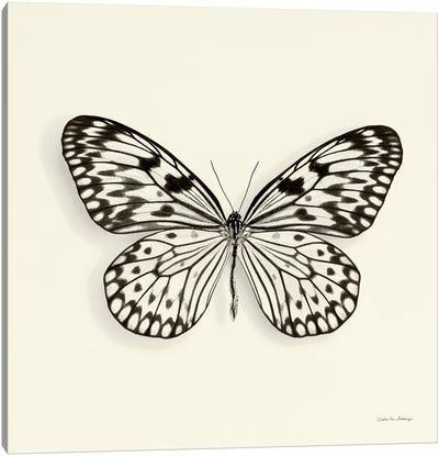 Butterfly V In B&W Canvas Art Print